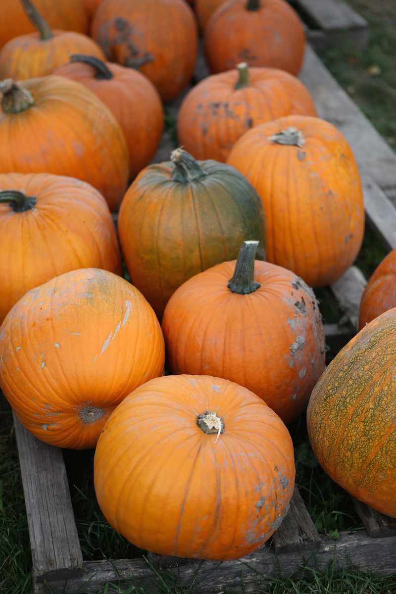 RSP_Dailyroutine_PumpkinPatch-1