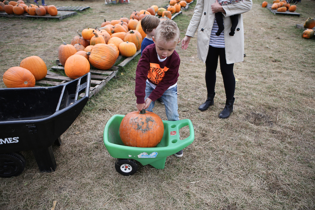 RSP_Dailyroutine_PumpkinPatch-16